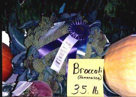 brokolis